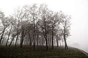 Damian Hevia - Trees In Morning Fog At...