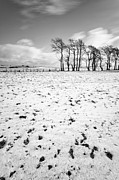 Snow Falling Photos - Trees in snow Scotland iii by John Farnan