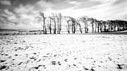 Snow Prints - Trees in snow Scotland iv Print by John Farnan