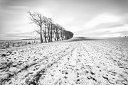 Scottish Art - Trees in snow Scotland v by John Farnan