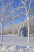 Winter Snow Landscape Photos - Trees In Snow  Wisconsin by Anonymous