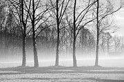 Randi Grace Nilsberg - Trees in Steam Fog