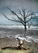 Storm Prints Metal Prints - Trees In Surf Metal Print by Steven Ainsworth
