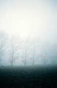 Fantasy Photos - Trees in the fog by Shawn Hempel