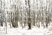 Neutral Colours Prints - Trees in the Forest Abstract Print by Natalie Kinnear