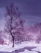 Dominic Piperata - Trees in Winter