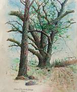 Jim Hubbard - Trees