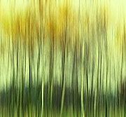 Amazing Landscape Prints - Trees Print by Kristin Kreet