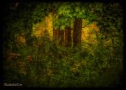 LeeAnn McLaneGoetz McLaneGoetzStudioLLCcom - Trees Leaves and Fall