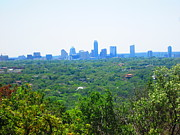 Austin Skyline Art - Trees of Austin by Cheri Lynn