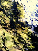 Cliff Lee Metal Prints - Trees On A Cliff Metal Print by Marcia Lee Jones