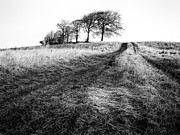 Winter Scene Photos - Trees on a hill by John Farnan