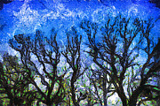 Nighttime Posters - Trees on Blue Night Sky Digital Painting Artwork Poster by Amy Cicconi