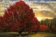 Farm Scenes Photos - Trees on Fire by Debra and Dave Vanderlaan