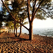 Justine Prato - Trees on the beach
