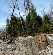 Gail Matthews - Trees on top of Rock Cut