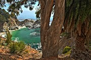 Big Sur Ca Posters - Trees Over McWay Falls Poster by Adam Jewell
