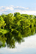 Lush Green Posters - Trees reflecting in river Poster by Elena Elisseeva