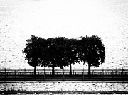 Thomas Berger Metal Prints - Trees Metal Print by Thomas Berger