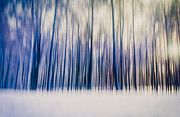 Thomas Richter Metal Prints - Trees Metal Print by Thomas Richter