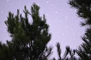 Starscape Prints - Trees Under the Stars Print by David Morefield
