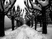 Tree Allee Framed Prints - Trees with snow Framed Print by Mats Silvan