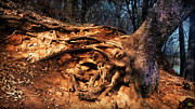 Tree Roots Paintings - Trees Written in the Land by Douglas MooreZart