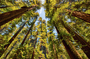 Avenue Of The Giants Prints - Treetop Rooftop - California Redwoods I Print by Dan Carmichael