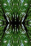 Denise Beverly - Treetops Abstract