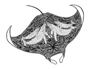 Animal Drawings Posters - Tribal Manta Poster by Carol Lynne