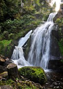 Germany Photo Originals - Triberg waterfalls by Matt MacMillan