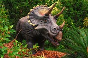 Museum Mixed Media Prints - Triceratops Print by Todd and candice Dailey
