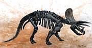 Dinosaurs Originals - Triceratops skeleton by Harm  Plat