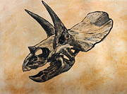 Dinosaurs Originals - Triceratops skull by Harm  Plat