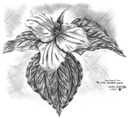 Griffith Drawings - Trillium 1996 by Thomas Griffith