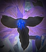 Neurotic Images Photography Prints - Trillium 3 Print by Chalet Roome-Rigdon