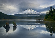 Trillium Reflections Print by David  Forster