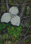 Naturalistic Originals - Trillium1 3013 by Thomas Griffith