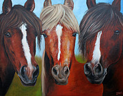 Quarter Horse Framed Prints - Trio Framed Print by Debbie Hart