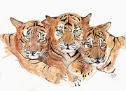 Catherine Basten - Triple cute Tiger Cubs