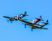 North American P51 Mustang Framed Prints - Triple Mustangs Framed Print by Puget  Exposure