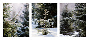 Santa Art Framed Prints - Triptych - Christmas Trees In The Forest - Featured 3 Framed Print by Alexander Senin