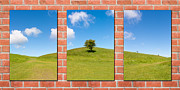Wall Decoration Framed Prints - Triptych of Nature Framed Print by Semmick Photo