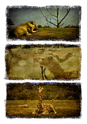 Shari Mattox Art - Triptych Wildlife by Shari Mattox