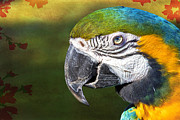 Blue And Gold Macaw Posters - Tropic Macaw Poster by Bill Tiepelman