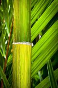 Tim Hester - Tropical Background