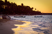 Palms Photos - Tropical beach at sunset by Elena Elisseeva