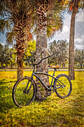 Garden Scene Metal Prints - Tropical Bicycle Metal Print by Debra and Dave Vanderlaan