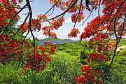 Puerto Rico Photo Prints - Tropical Bloom Print by George Oze