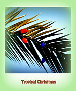 Trees And Palm Trees - Tropical Christmas by Susanne Van Hulst